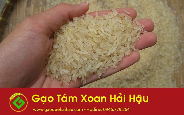 Gạo Tám Xoan Hải Hậu - Đặc sản quê hương Nam Định
