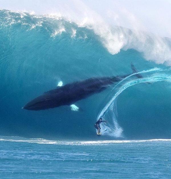 Surfando com as baleias