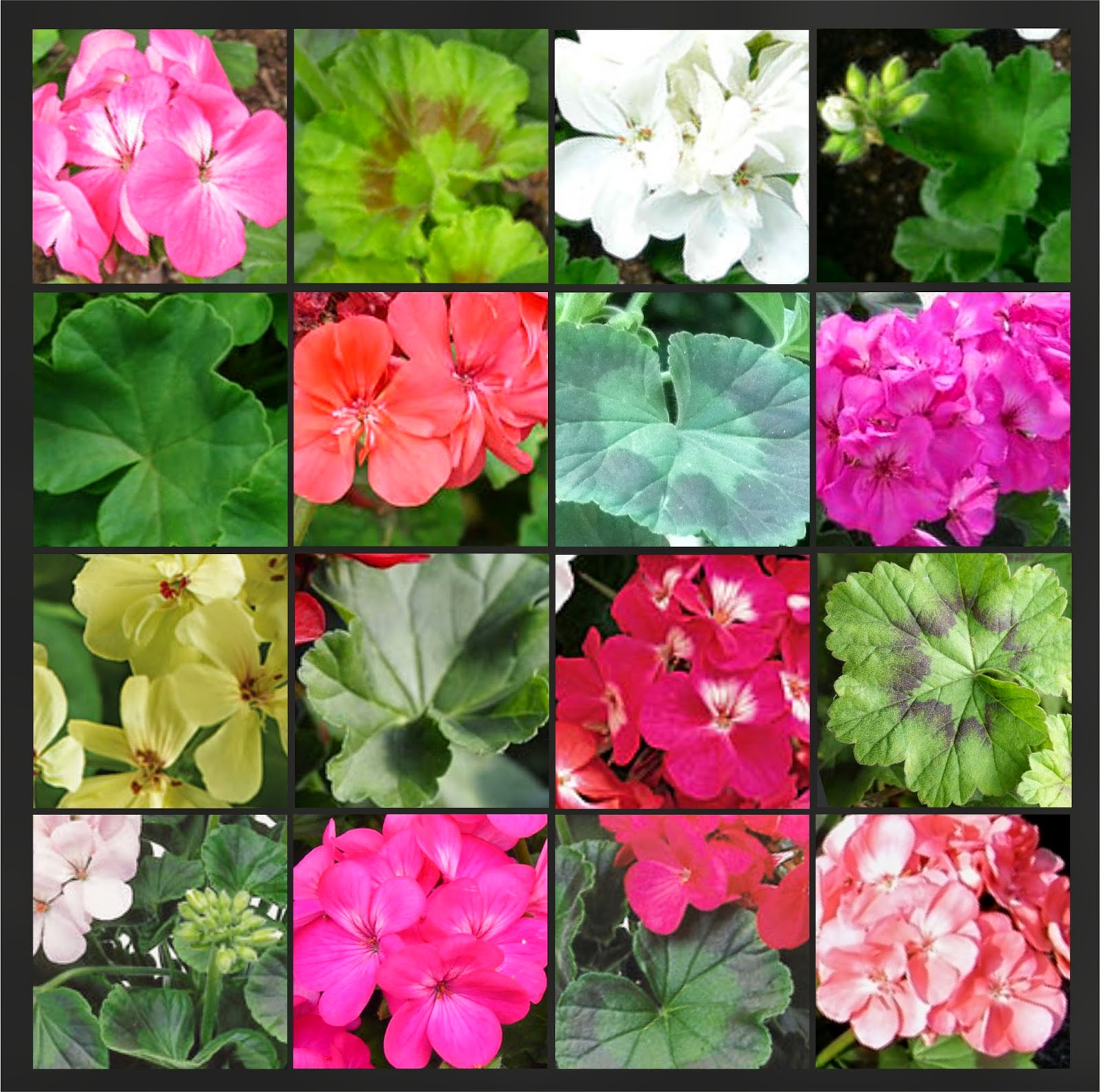 V e r d e c h a c o agosto 2014 for 6 plantas ornamentales