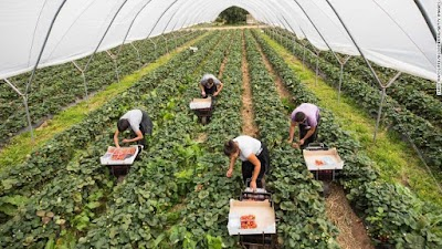 قد يجبر الفيروس التاجي المملكة المتحدة على إعادة التفكير في علاقتها بالعمال المهاجرين