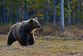 Bear Photo by Zdeněk Macháček on Unsplash