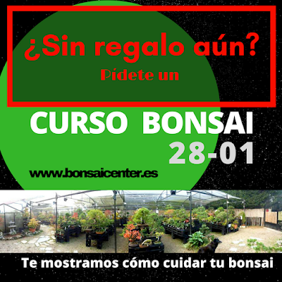 Bonsai center sopelana cursos y talleres de bonsai