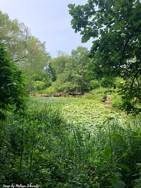 Peeking at the lily pool through the trees at Alfred Caldwell Lily Pool in Chicago.