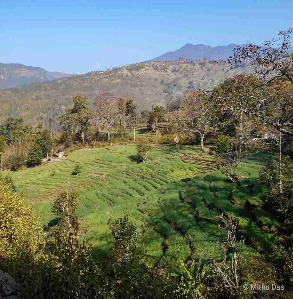 Silgadhi rice terraces