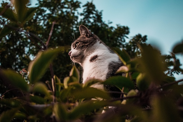 fotografias-de-animales-domesticos