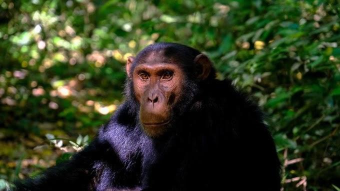 Több mint 70 éve szöktek meg: majomkolónia él egy repülőtér szomszédságában