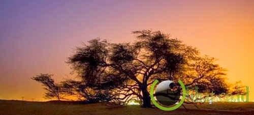 Pohon Kehidupan