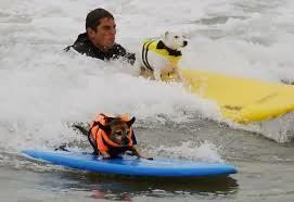 cães surfando na praia