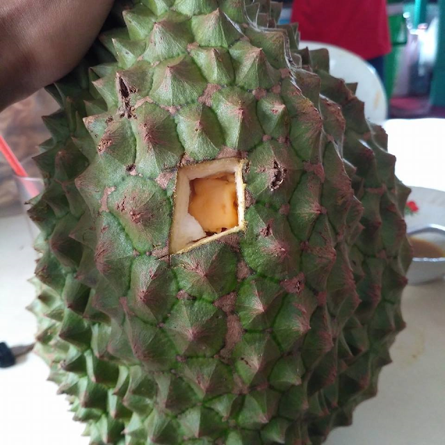 Ciri-Ciri Durian Bawor Sang Bhinneka Durian