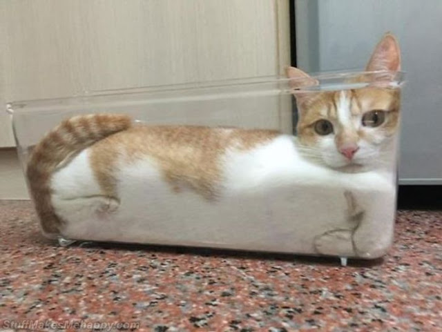 3. Liquids take the form of their containers. This is my cat.