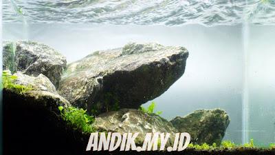 aquascape, aquarium, tanaman aquascape,