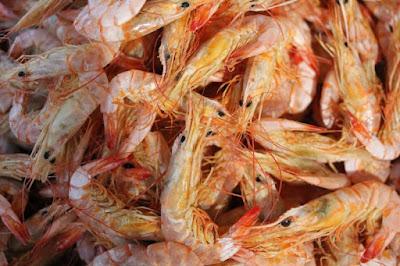 Coral Vivo contribui na caracterização da pesca artesanal