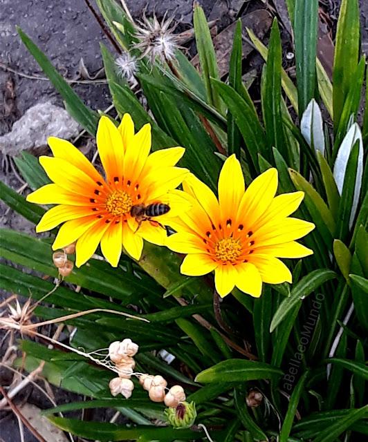 abelhas e seu significado - a Bella e o Mundo