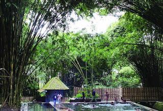 Tempat Wisata Hutan Bambu