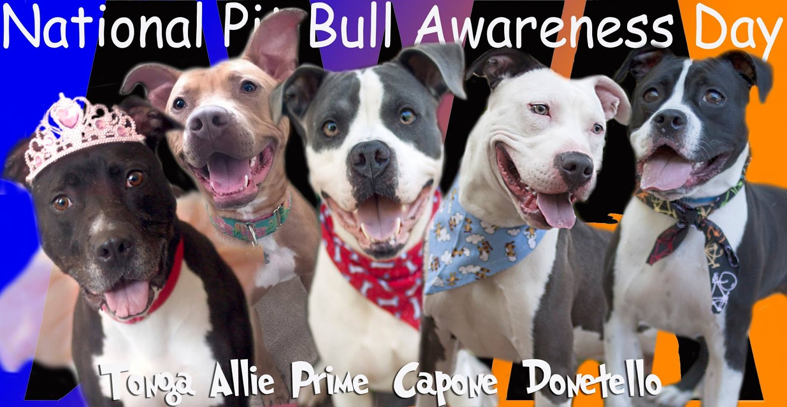 National Pit Bull Awareness Day Wishes pics free download