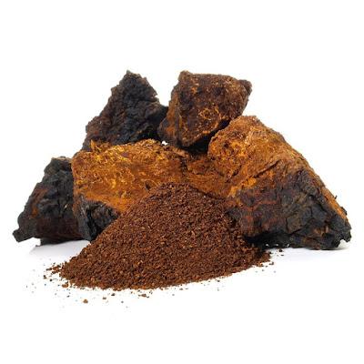 Where to buy chaga mushroom powder