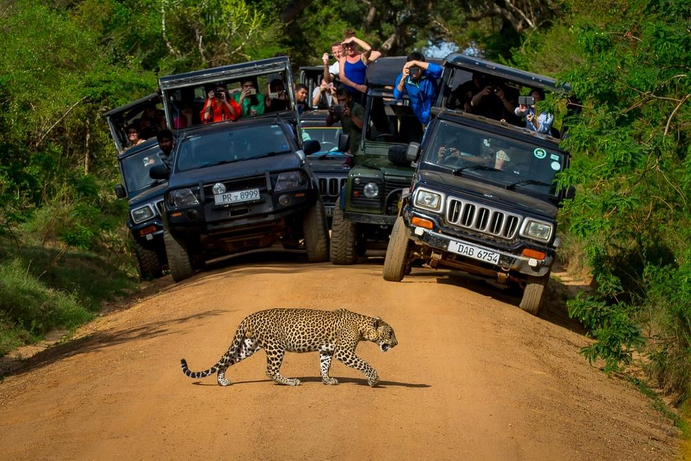 Yala Safari - Yala National Park