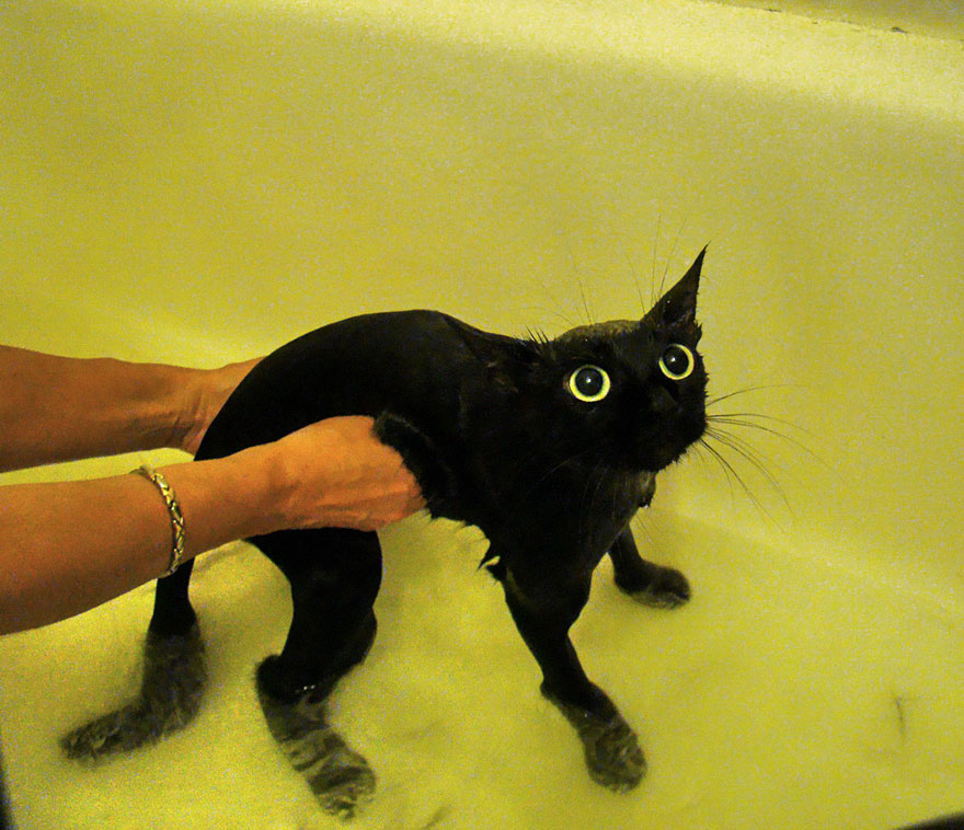 funny-wet-cats-20