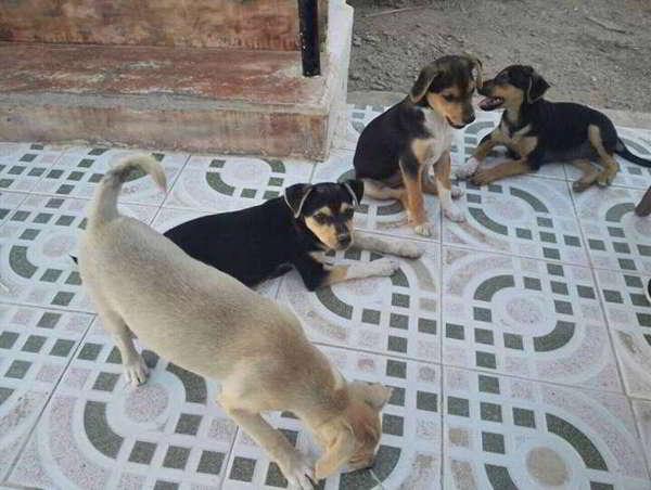 cachorros de tamaño pequeño