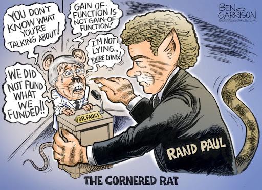 Fauci Cornered Rat
