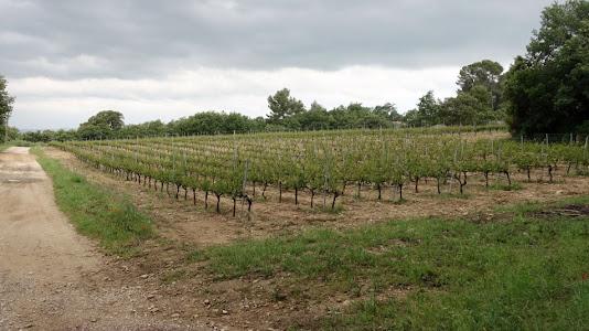 Château la Canorgue Vineyard
