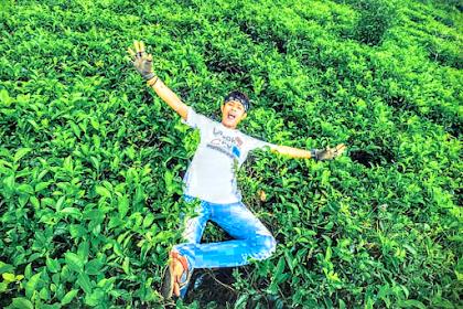 Wisata Alam Kebun Teh Medini Kendal, Jawa Tengah
