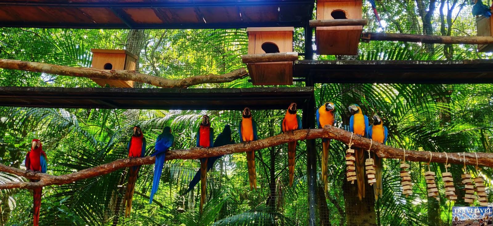 Iguassu Iguaçu Iguazu Brésil Chutes Cascade parc oiseau aves