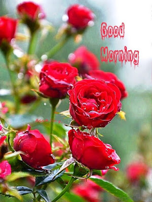 Happy Morning Images