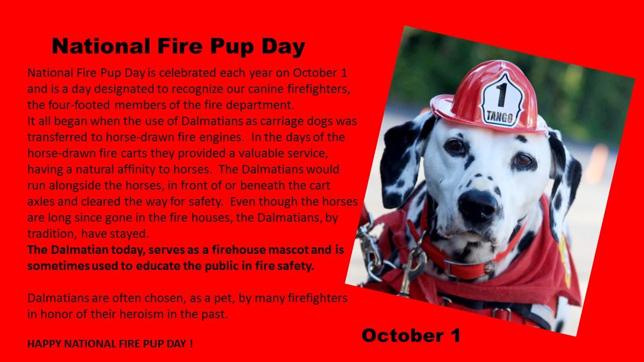 National Fire Pup Day Wishes Photos