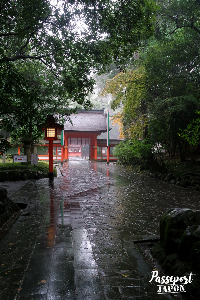 Chemin boisé, sanctuaire Usa-jingû, Oita