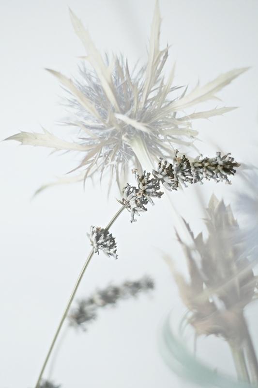 Blog + Fotografie by it's me! - 2in1 von Lavendel und Distel