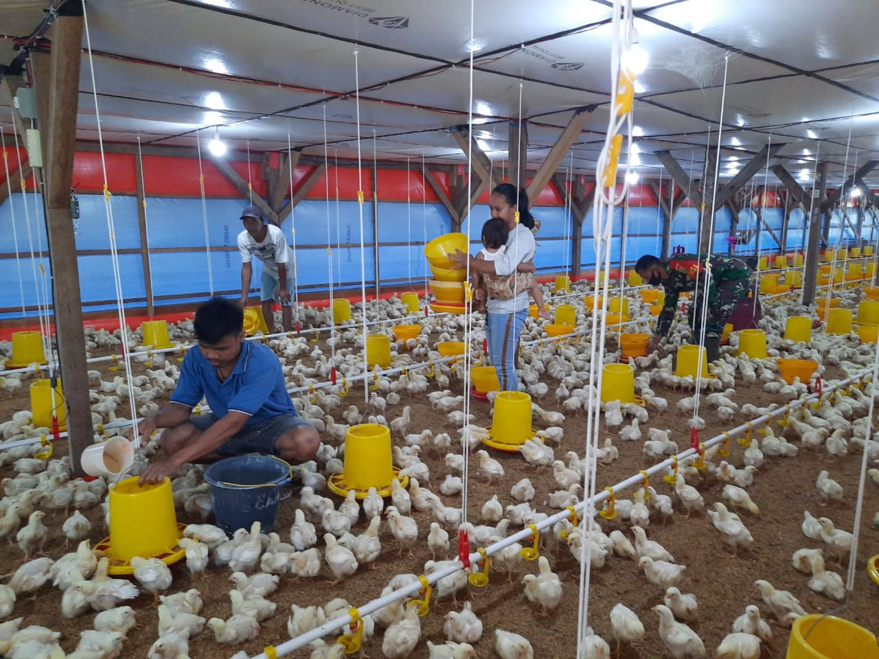 Babinsa Koramil 410-01Panjang Kodim 0410Kota Bandar Lampung Serda Aan Ansori beserta istrinya membangun suatu usaha peternakan ayam Broiler dengan sistem semi modern