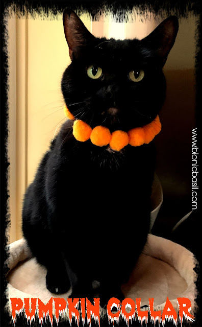 Creepy Crafting with Cats Halloween Special ©BionicBasil® BBHQ Easy Peasy Pumpkin Collar