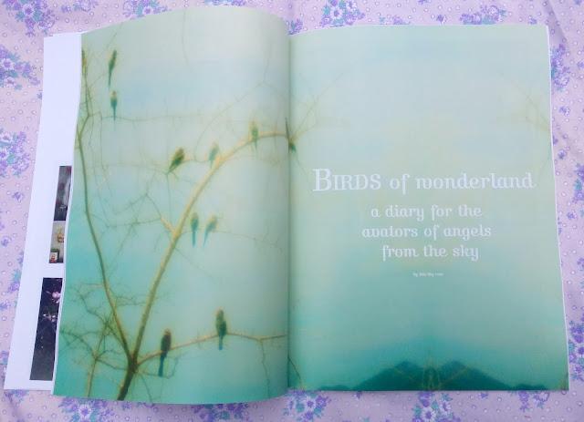 bird diary