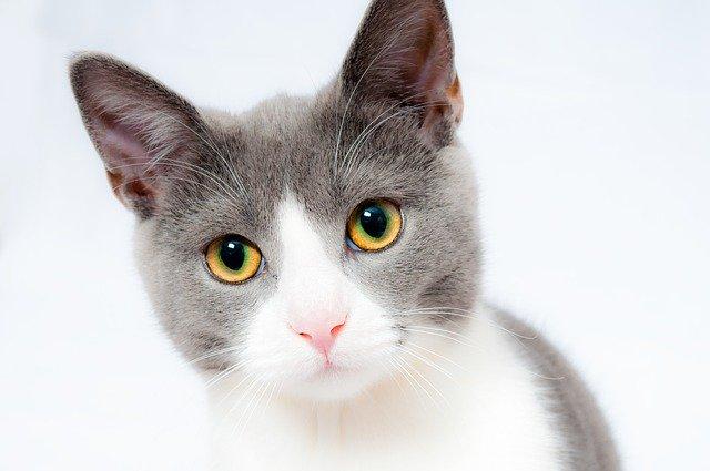 cute cat images hd