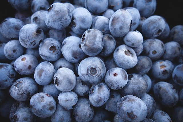 Grow blueberry bushes in pot at Home