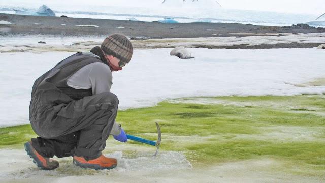 Η κλιματική κρίση μεταβάλλει το χιόνι της Ανταρκτικής