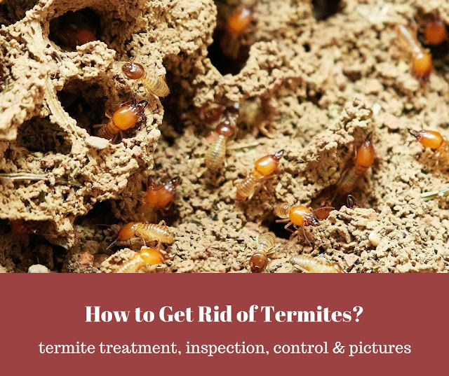 How to get rid of termites in the soil