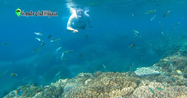 wisata snorkling dan diving di pantai amuk bali, surga snorkling tersembunyi bali timur