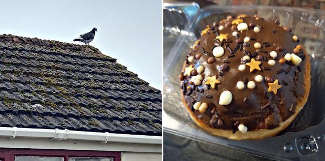 A pigeon and a chocolate doughnut