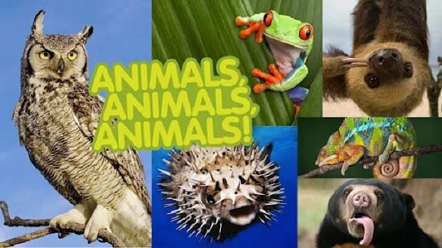 خصائص الحيوانات وصفاتها للاطفال