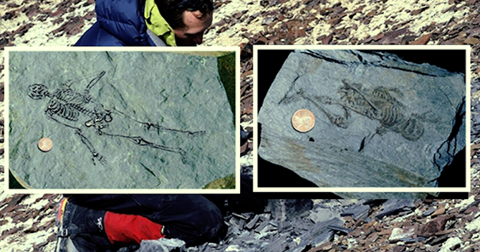 Ancient Fossils of Tiny Humanoids Discovered in Antarctica