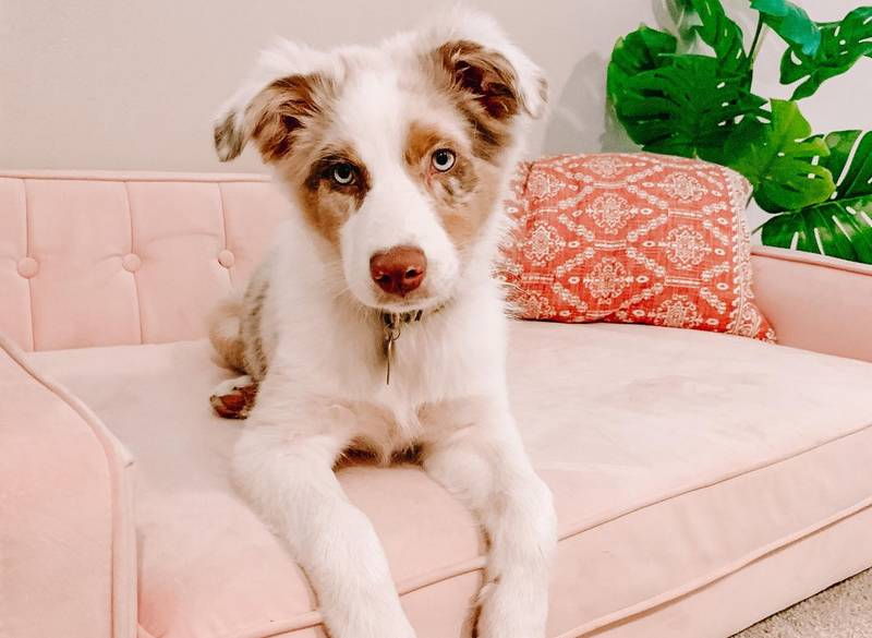 My Dog Peed on My Bed - What Does It Mean?