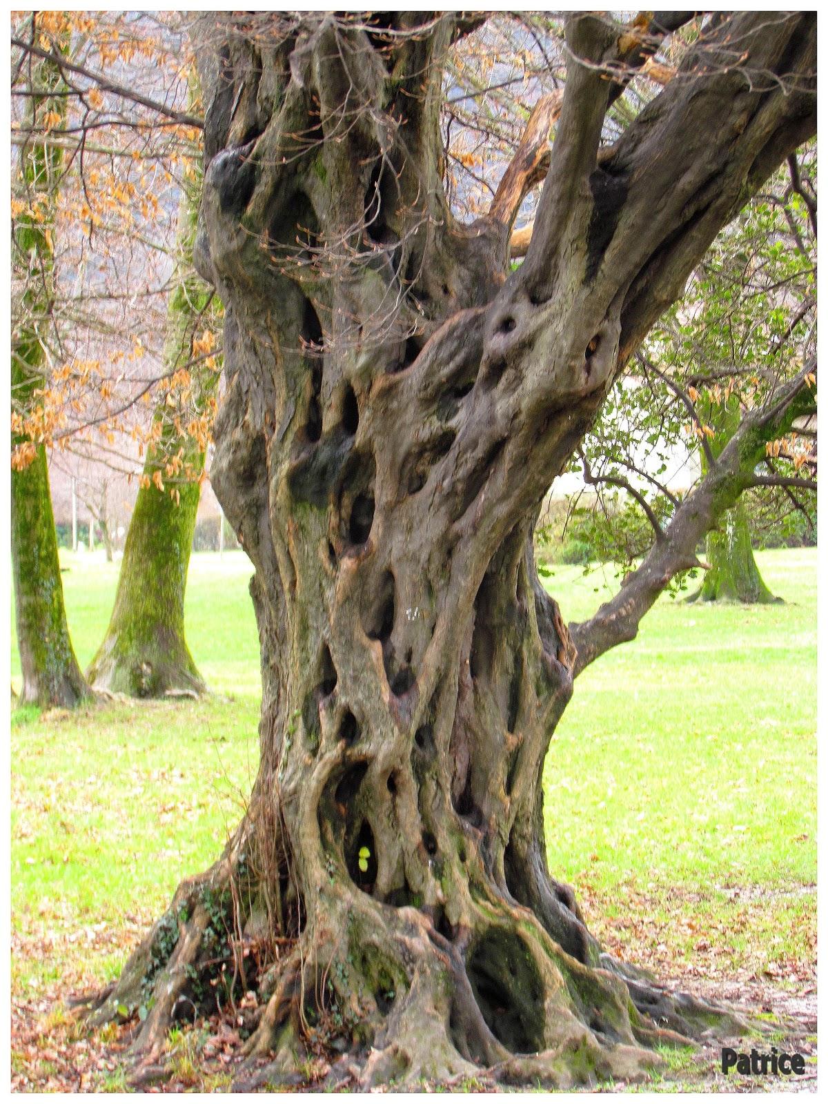 Blog photos de patrice balade a sassenage - Achat tronc arbre decoratif ...