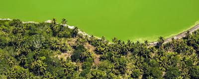 Lac Dziani  au sud de la grande terre à Mayotte vert avec cocotiers.