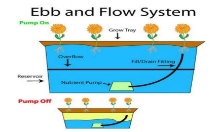 Sistem Pasang surut (Ebb and Flow system)