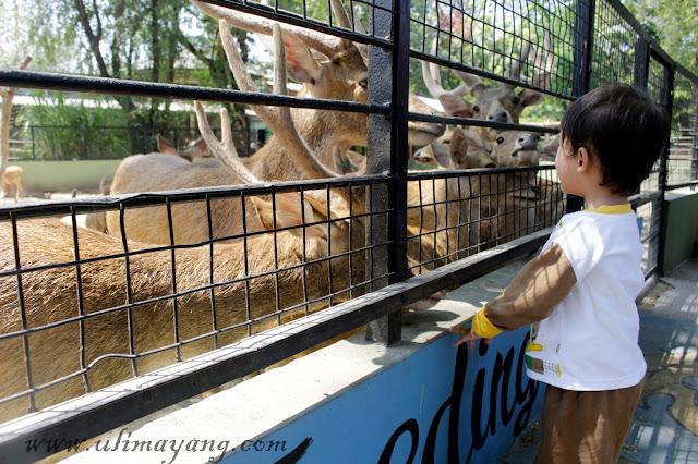 Cara-mengajar-anak-nama-nama-hewan-cepat-hafal-interaksi-langsung