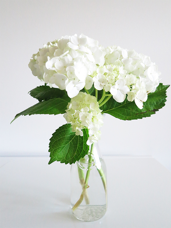 The hydrangeas in this photo are 2+ weeks old. Learn how to make cut hydrangeas last FOREVER in a vase.