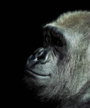 مجموعه من صور الحيوانات بجوده عالية HD