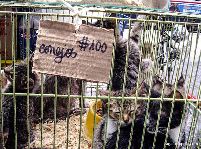 Animais à venda na Feira de Tristan Narvajas, em Montevidéu, Uruguai